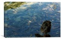 Fish in the lake at Plitvice National Park, Canvas Print