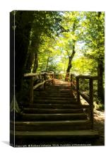 Wooden steps upwards in the forest - Plitvice Nati, Canvas Print