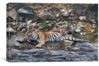 Tiger Family, Canvas Print
