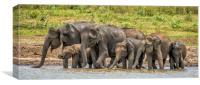 Thirsty Asian Elephants, Sri Lanka, Canvas Print