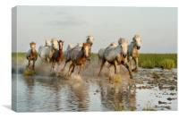 Mares and Foals in the Marshes, Canvas Print