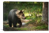 Bear in the Woods, Canvas Print
