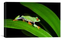 Red Eyed Tree Frog on Green, Canvas Print