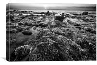 Seaweed and Rocks in Mono, Canvas Print