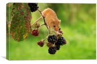 Harvest Mouse and Berries, Canvas Print