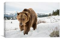 Bear in Snow, Canvas Print