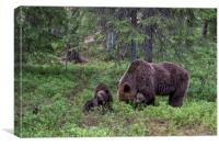 Brown Bear Family, Finland, Canvas Print