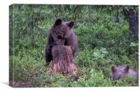 Cute Cubs, Canvas Print