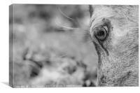 A deers eye, Canvas Print