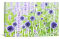 Echinops 'Veitch's Blue', Canvas Print
