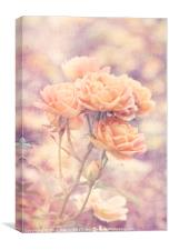 Rosa Sweet Dream (AGM) Vintage, Canvas Print