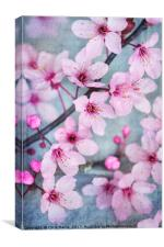 Cherry Blossom Chic, Canvas Print
