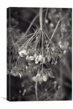 Unknown plant, Canvas Print