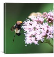 collecting pollen , Canvas Print