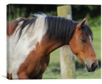 beautiful horse , Canvas Print