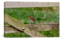 Robin Resting on a Gate!, Canvas Print