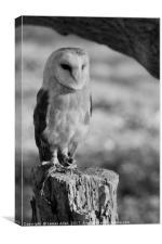 Standing Proud!!  (Barn Owl Black & White), Canvas Print