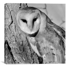 Barn Owl (Black & White Pose), Canvas Print