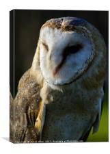 The Happy contented Barn Owl, Canvas Print