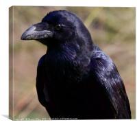 Raven , Canvas Print