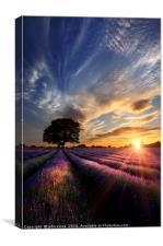 Purple Peace, Canvas Print