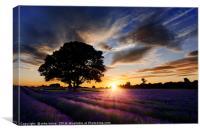 Summer Lavender , Canvas Print