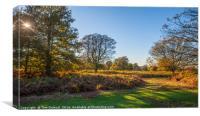 Autumn dapple light, Canvas Print