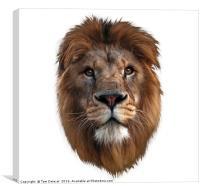 Lion portrait white, Canvas Print