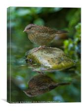 Dunnocks' reflection, Canvas Print