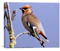 Waxwing Basking In The Sunshine, Canvas Print