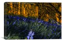Bluebells, Canvas Print