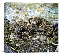 Spotted Flycatchers Nest, Canvas Print