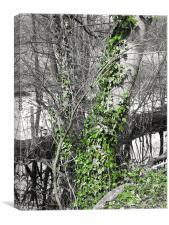 Ivy Climb