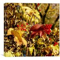 Autumn Fruit, Canvas Print