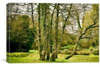 Sylvan woodland, Canvas Print