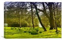 Springtime woodland, Canvas Print