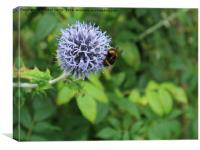 Flower with Bumblebee , Canvas Print