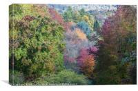 Glorious autumn colours, Canvas Print