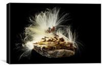 Macro photo of swamp milkweed seed pod, Canvas Print