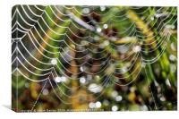 Spider Patterns , Canvas Print