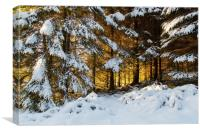 Winter Woodland Sunset , Canvas Print
