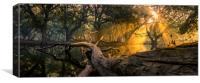 A Heavenly Morning at Keoladeo, Canvas Print
