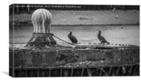 Cormorants on the Thames, Canvas Print