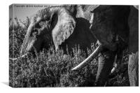 A Pair of Elephant, Canvas Print