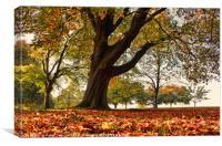 An Autumn Carpet, Canvas Print