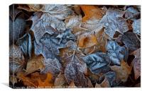 Frozen leaves, Canvas Print