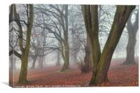 A Foggy Day in Sherwood, Canvas Print