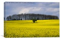 Field of Yellow, Canvas Print