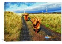 Nosy Highland Cattle. , Canvas Print