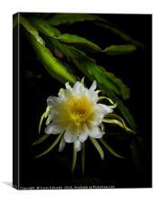 Dragon fruit flower, Canvas Print